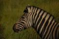 Africa de Sud - Animalute si malul oceanului