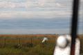 La intrecere cu o egreta