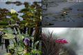 Flori in Ibera