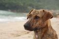 Paraty, prieten nou la plaja