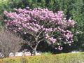 Spre Paraty, copacei colorati
