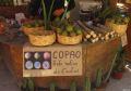 Copao, cactus cu zahar