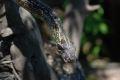 Sarpe, la gradina zoologica