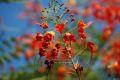 Flori colorate, nu stim cum le cheama