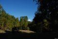 Vulcanul Villarica, printre copaci