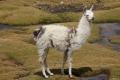 Peru - Arequipa si Colca Canyon